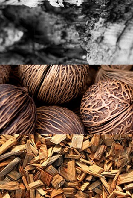 What's the difference? Wood, Coconut, or Charcoal based filtration?